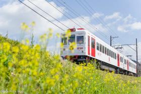 ichigo_train_s